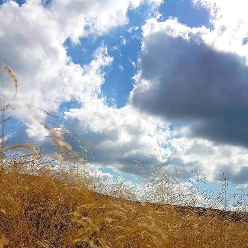 fototapeta z widokiem na łąkę oraz chmury