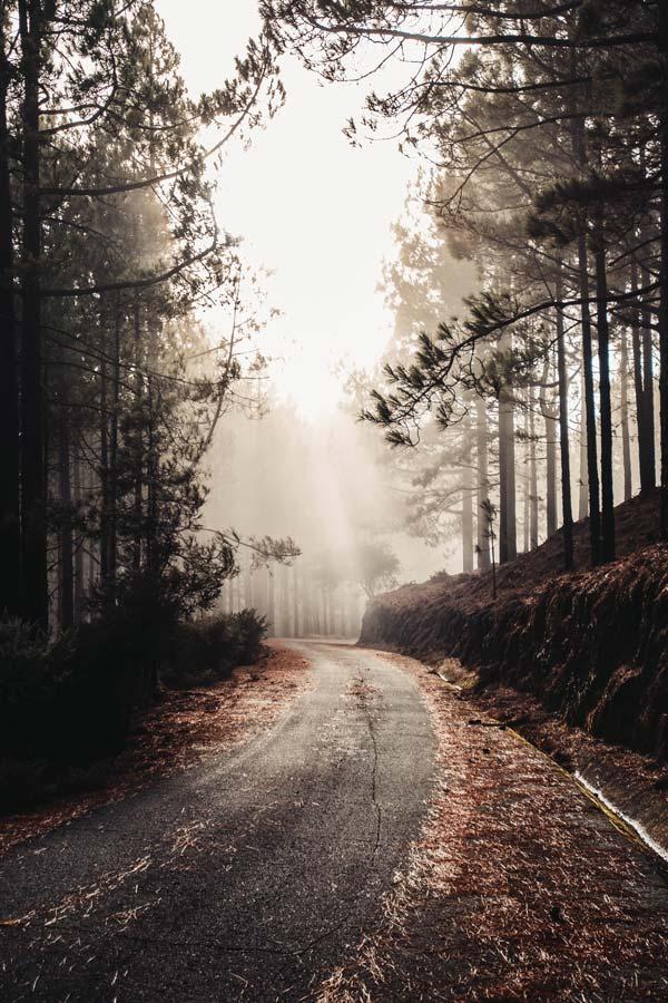 pionowe ujęcie piękna stara droga otoczona skałami wysokie drzewa doskonała tapeta